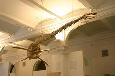 Plesiosaurus by Ryan Somma, via Flickr