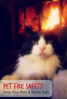 {Cats} Living With Cats on Pinterest