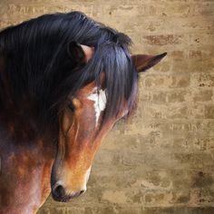 ridiculously gorgeous equines