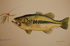Large Mouth Bass Fish by Lynn Beazley Blair Largemouth Bass, Bass Fishing, Fish Paintings, Wall Art, Painting Inspiration, Animals, Google Search, Pets, Animales