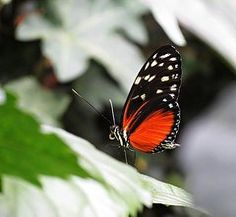 MTBobbins Photography - Butterfly on Leaf