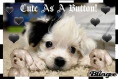 Blingee Animals | Cute Animals I Love Animals Glitter Graphics Free Sparkle Graphics ...