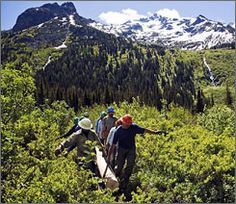 """Volunteers haul a """"stringer"""" to be used on a trail structure in the Cascade mountains. The Washington Trails Association is reporting """"recor..."""