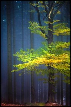 Tree and forest, Germany - David Pinzer. Indigo, leaf green and yellow = winning combination.(Cool Pictures Of Nature) Beautiful World, Beautiful Places, Beautiful Pictures, Beautiful Forest, Tree Forest, Autumn Forest, Forest Light, Spring Forest, Magical Forest