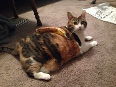 Funny pictures about Banana For Kitty Scale. Oh, and cool pics about Banana For Kitty Scale. Also, Banana For Kitty Scale photos. Crying Meme, Cat Crying, Best Funny Pictures, Cute Pictures, Banana Funny, Funny Animals, Cute Animals, Crazy Animals, The Meta Picture