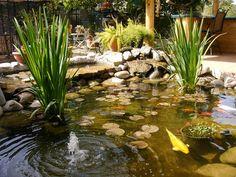 Backyard layout with pool koi ponds 17 trendy Ideas Small Fish Pond, Koi Fish Pond, Fish Ponds, Swimming Ponds, Backyard House, Ponds Backyard, Garden Ponds, Garden Oasis, Backyard Ideas