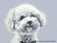 Bichon Friese...I'm just a little biased!  :-)