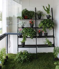 Grass in a balcony with herb garden.