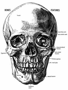 mental foramen - Google Search