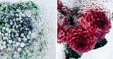 Flotsam: Flower Portraits Captured Underwater | Bored Panda