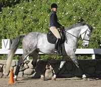 Tips on Sitting the Trot and Cross-Training