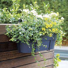 Zinc Oval Planter | Crate and Barrel