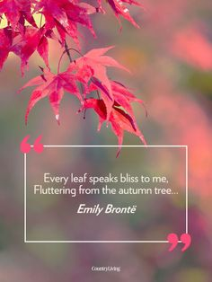23 Fall Quotes - Sayings About Autumn - via Country Living