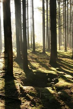 Foxhole  in the Ardennes Forest today.--> i WILL go here someday!!