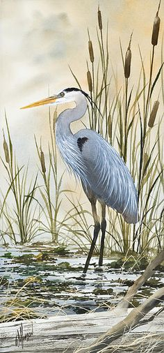Heron And Cattails Leinwanddruck / Leinwandkunst von James Williamson - Vogel Watercolor Bird, Watercolor Paintings, Watercolors, Canvas Art, Canvas Prints, Art Prints, Fine Art Amerika, Blue Heron, Bird Drawings