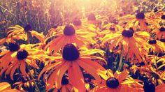 flowers in vienna Orange Flowers, Photographs, Pumpkin, Outdoor, Outdoors, Gourd, Pumpkins, Orange Blossom, Fotografie