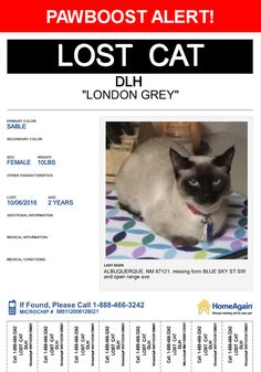 Please spread the word! London Grey was last seen in Albuquerque, NM 87121.  Description: She's more of a darkish brown/black now.   Nearest Address: Blue Sky St SW, Albuquerque, NM, United States