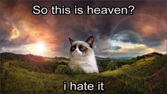 gets you the ultimate collection of Grumpy cat Memes heaven that are so hilarious.Keep scrolling down to the endless collection of Grumpy cat Memes heaven.Hopefully you will enjoy it.Read This 28 G… Grumpy Cat Quotes, Funny Grumpy Cat Memes, Cat Jokes, Funny Cats, Memes Humor, Comedy Memes, Meme Comics, Animals And Pets, Funny Animals