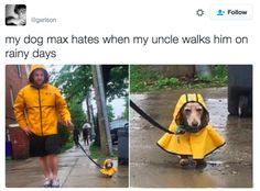 And this one simply trying to avoid the rain. | 21 Pictures That Prove Dogs Are Actually Completely Perfect