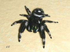Jumping Spider, Spiders, Nature Pictures, Doodle, Insects, Sleeve, Scribble, Manga, Spider