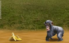 The perfect Monkey Banana Animated GIF for your conversation. Discover and Share the best GIFs on Tenor. Animiertes Gif, Animated Gif, Humor Satirico, Animation, Monkey And Banana, Gif Pictures, Cute Kittens, Funny Cute, Cute Animals