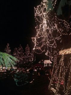 The Legendary Lights of Clifton Mill-Christmas 2014.