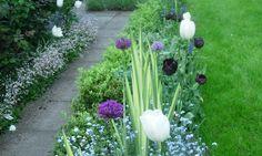 Spring Border in a garden in Ascot