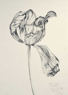 """it is you"", natalie prass Floral Illustrations, Botanical Illustration, Graphic Design Illustration, Botanical Prints, Illustration Art, Art Drawings, Graphite Drawings, Art Sketchbook, Painting Inspiration"