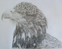 How to draw an Eagle Part 1