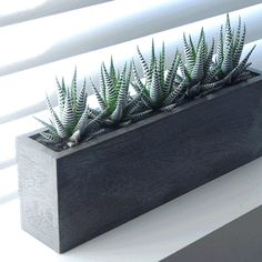 Zebra Cactus Kiri Wood Planter | Shop Modern Planters | http://www.urbilis.com/zebra-cactus-kiri-wood-planter/