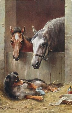 in stables, two  horses watch an ill dog lying in the hay