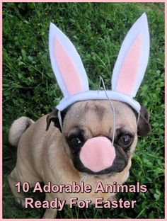 Lend Me Your Ears! - 10 Adorable Animals Ready For Easter   ... see more at PetsLady.com ... The FUN site for Animal Lovers
