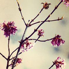 finally spring...