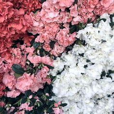 Flowers make me 😀🌺