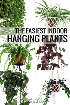 Looking for new hanging plant? Choose one that is easy to care for, since plants higher up are harder to reach and easy to forget about. You need easy growing, non-fussy, low maintenance plants. These are the easiest hanging plants for your home! Inside Plants, Ivy Plants, Cool Plants, Garden Plants, House Plants, Plants For Home, Potted Plants, Cactus Plants, Ivy Plant Indoor