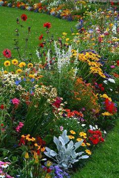 Garden Yard Ideas, Lawn And Garden, Garden Projects, Moss Garden, Backyard Ideas, Zinnia Garden, Spring Garden, Indoor Garden, Potager Garden