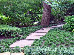 Outdoor & Landscaping,Wonderful Dwarf Mondo Grass For Home Landscaping Ideas: . Dwarf Trees For Landscaping, Outdoor Landscaping, Front Yard Landscaping, Backyard Landscaping, Landscaping Ideas, Backyard Ideas, Large Backyard, Florida Landscaping, Backyard Patio