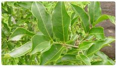https://knockdiabetes.com/herbal-ingredients/ Herbal,daibetes,cure sugar,glucose control