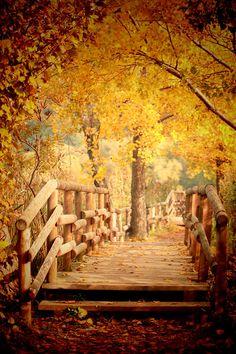 Autumn in Wonderland by ellixille @ http://adoroletuefoto.it