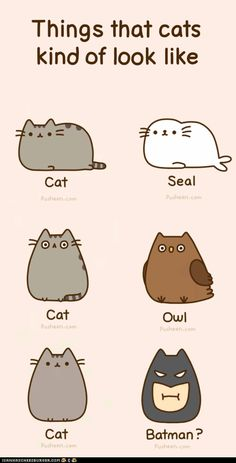Things that look like pusheen fat cat cartoon, funny cartoon drawings, cute Funny Drawings, Cute Animal Drawings, Cartoon Drawings, Drawings Of Cats, Awesome Drawings, Cartoon Images, Gato Pusheen, Cute Fat Cats, Chat Kawaii