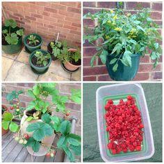 growing veg and fruit in garden newbie - lylia rose lifestyle blog uk