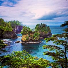 Cape Flattery is one of the most beautiful spots at the edge of the world (or the northwestern-most edge of North America, anyway). The Cape Flattery Trail is an easy 1.5 mile hike on cedar planks through rich rainforest, culminating in a stunning view of the ocean and an array of lush outcroppings, floating kelp gardens and swirling, blue waters washing in and out of the sea caves below. Sea lions pepper the... Discovered by Intrepidor at Cape Flattery Trailhead, Clallam County, Washington