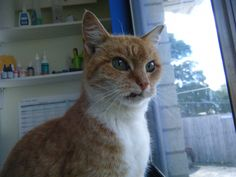 Found Cat! Found at the Greerton countdown, if you have lost your cat that looks like this, please contact us