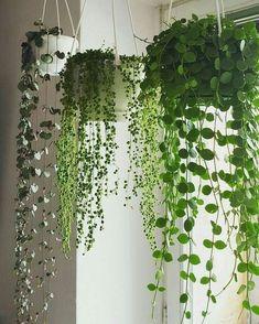 50 Awesome DIY Hanging Plants Ideas For Modern Backyard Garden - Wedding Hanging Succulents, Succulents Garden, Hanging Planters, Garden Plants, Succulent Display, Large Planters, Nature Plants, Diy Hanging, Green Garden