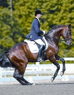 hunter jumper dressage horse equine equestrian