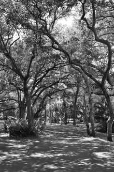 Black and white photo of trees arching over