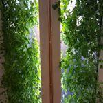 Höja pH i Aquaponics Aquaponics System, Hydroponics, Gardening, Plants, Design, Ska, Hydroponics System, Lawn And Garden