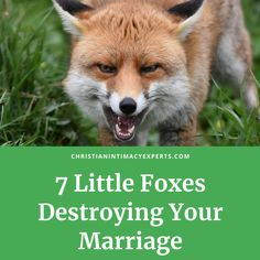 The 7 little foxes devouring your marriage based on Song of Solomon Intimacy In Marriage, Strong Marriage, Happy Marriage, Marriage Advice, Christian Couples, Christian Love, Christian Marriage, Before And After Marriage, Marriage Conference