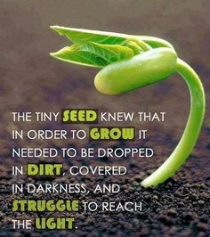 The tiny seed knew that in order to grow it needed to be dropped in dirt, covered in darkness, and struggle to reach the light. thedailyquotes.com