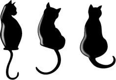 """""""O GRITO DO BICHO"""": Gatos confusos com colchões de água #ogritodobicho #falabicho"""